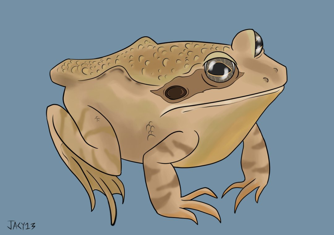 commonfrog.png